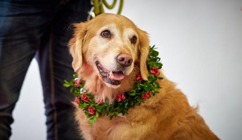 Unsere Therapiehunde schaffen eine Brücke, längst vergessene Gefühle zu aktivieren.